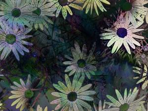 daisies 2